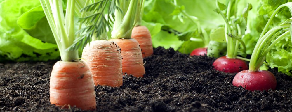 Vegetable Garden Compost Application